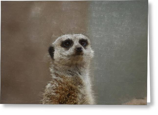 Meerkat 5 Greeting Card by Ernie Echols