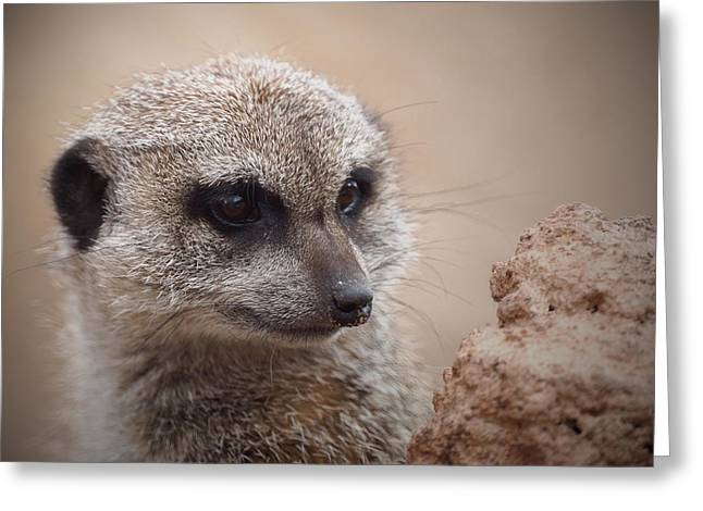 Meerkat 7 Greeting Card by Ernie Echols