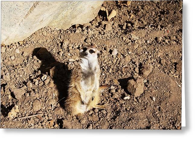 Meerkat Lookout Greeting Card