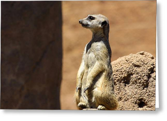 Meerkat Lookout Squared Greeting Card by Chris Thomas