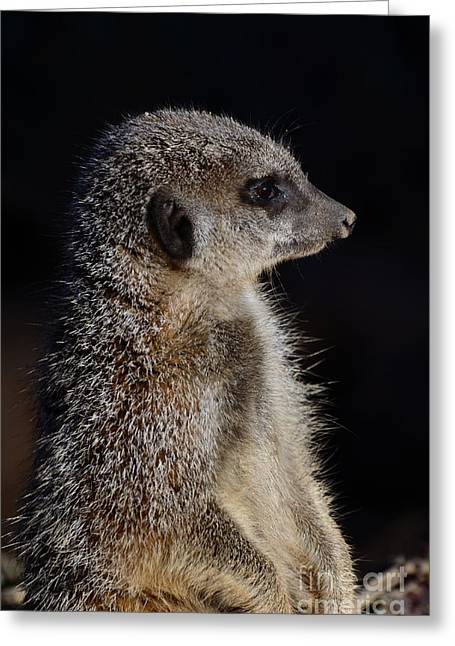 Meerkat Greeting Card by Steev Stamford