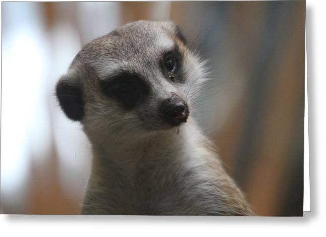 Meerket - National Zoo - 01134 Greeting Card by DC Photographer