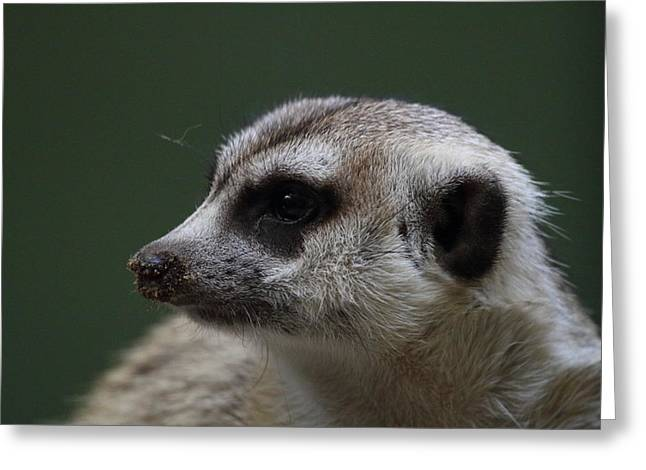 Meerket - National Zoo - 01137 Greeting Card by DC Photographer