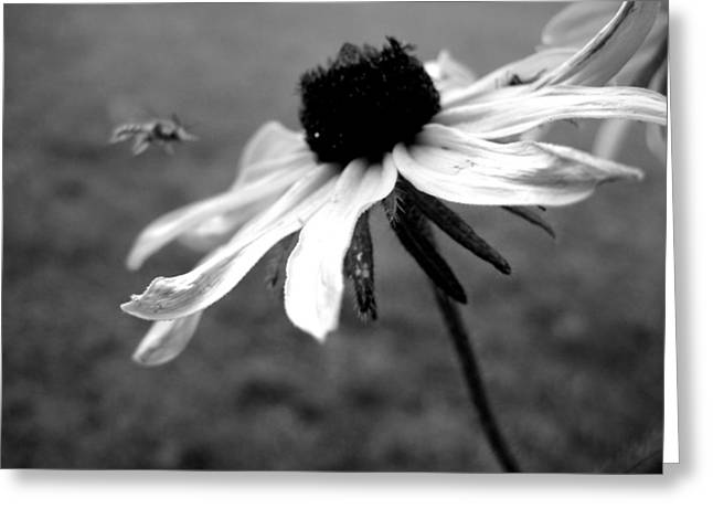 Meet In The Middle Greeting Card by Gilbert Photography And Art
