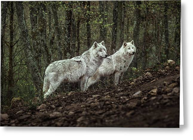 Meeting With White Wolves Greeting Card