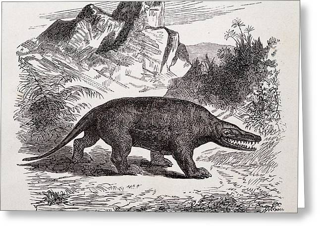 Megalosaurus Dinosaur Greeting Card by Paul D Stewart