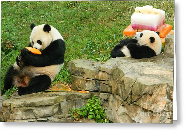 Mei Xiang And Bao Bao In Celebration Greeting Card by Emmy Marie Vickers