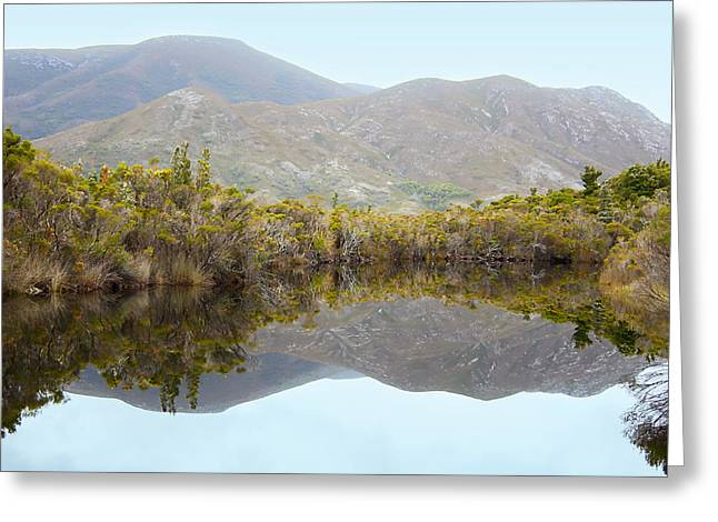 Melaleuca Creek Greeting Card by Carole-Anne Fooks