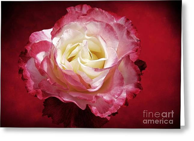 Mellow Passion Greeting Card by Ellen Cotton