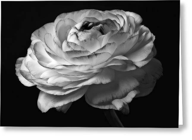 Black And White Roses Flowers Art Work Macro Photography Greeting Card by Artecco Fine Art Photography
