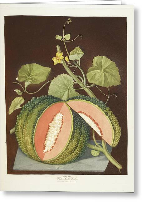 Melon Greeting Card by British Library