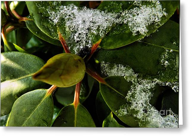Greeting Card featuring the photograph Melting Crystals by Robyn King