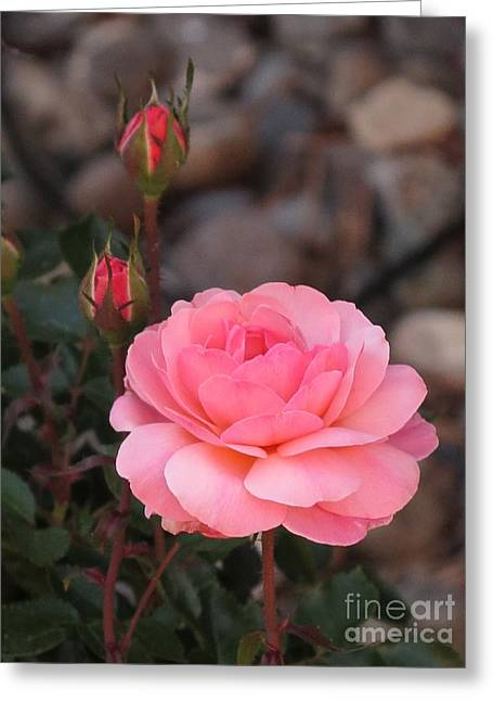 Memorial Day Rose Greeting Card by Phyllis Kaltenbach