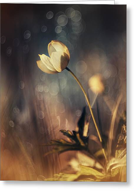 Memories Of Daylight Greeting Card by Magda  Bognar