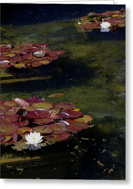 Memories Of Monet Greeting Card by Marilyn Wilson