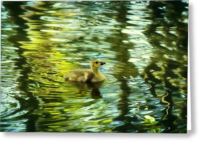 Memories Of Spring Greeting Card by Melanie Lankford Photography