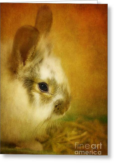 Memories Of Watership Down Greeting Card