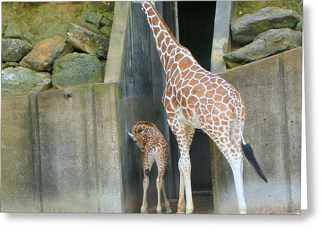 Memphis Girraffe Greeting Card by Shirley Moravec