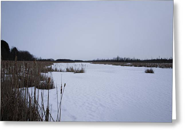 Mer Bleue Bog In The Wintertime Greeting Card by Philip G