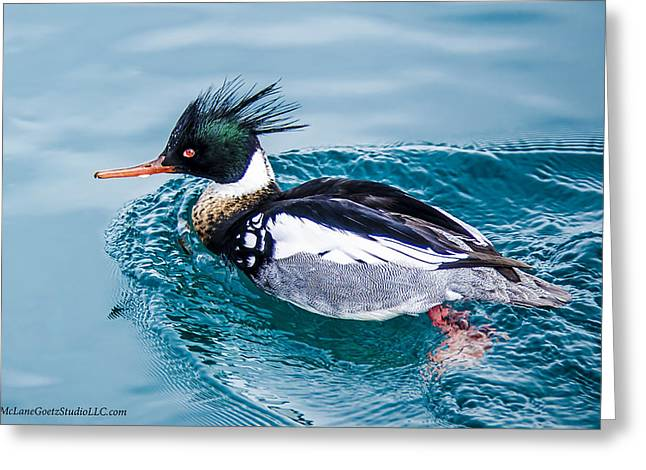 Merganser Duck Greeting Card by LeeAnn McLaneGoetz McLaneGoetzStudioLLCcom