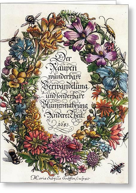 Merian's 'metamorphosis' (1683) Greeting Card by Paul D Stewart