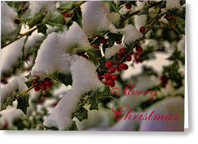 Merry Christmas Card Holly Greeting Card