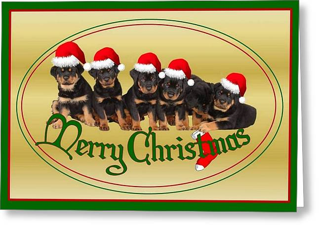 Merry Christmas Rottweiler Puppies Greeting Card Greeting Card by Tracey Harrington-Simpson
