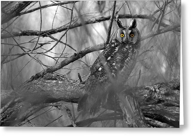 Mesmerizing Eyes Greeting Card by James Peterson