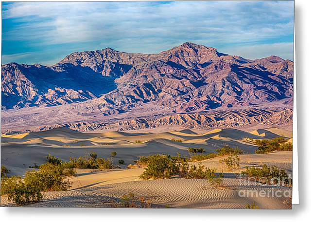 Mesquite Dunes And Mountains Greeting Card