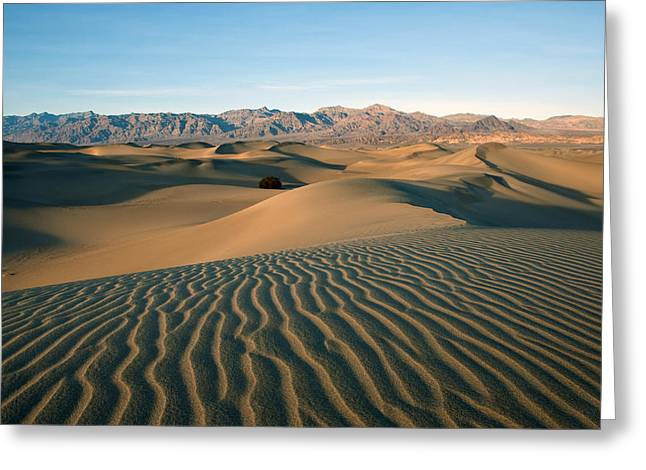 Mesquite Dunes Greeting Card