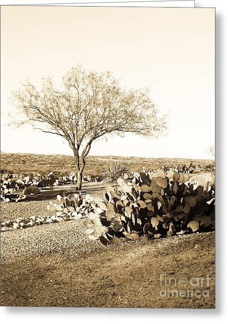Mesquite Greeting Card by Judi FitzPatrick