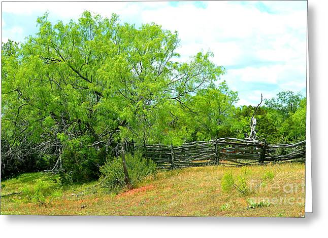 Mesquite Tree And Cedar Post Fence Greeting Card
