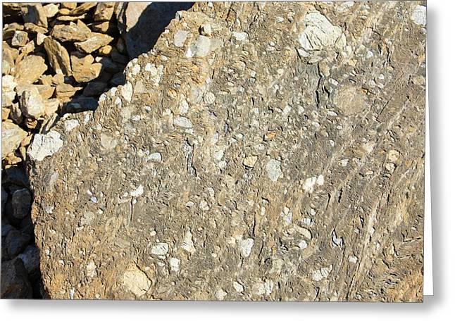 Metamorphic Rock Showing Micro Folding Greeting Card by Ashley Cooper