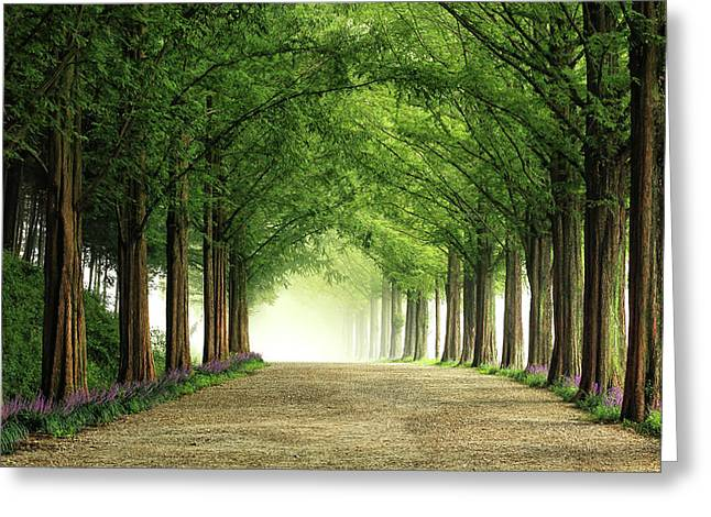 Metasequoia Road Greeting Card