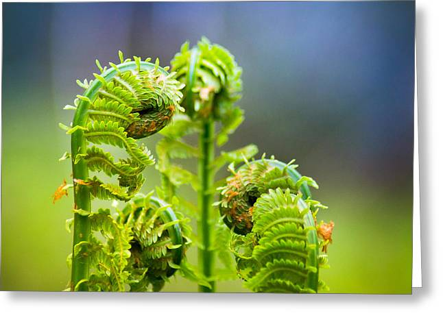 Meting Of The Ferns Greeting Card by Bill Pevlor