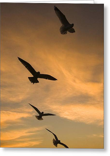 Mew Gulls At Sunset La Jolla California Greeting Card