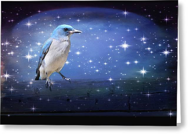 Mexican Blue Jay Greeting Card