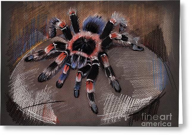 Mexican Redknee Tarantula Greeting Card