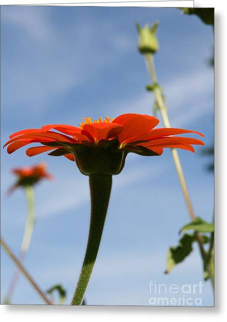 Mexican Sunflower Dance  Greeting Card by Neal Eslinger