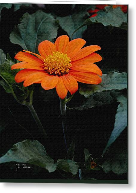 Greeting Card featuring the photograph Mexican Sunflower by James C Thomas
