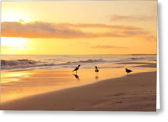 Mexico Beach Sand Pipers Greeting Card