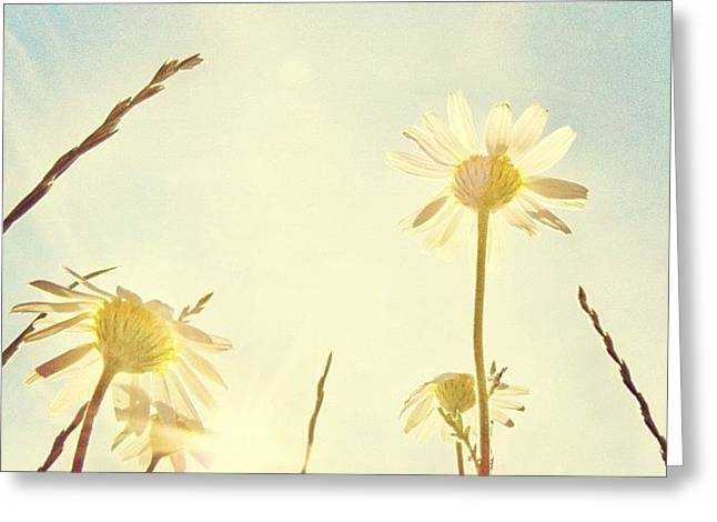 #mgmarts #daisy #all_shots #dreamy Greeting Card by Marianna Mills