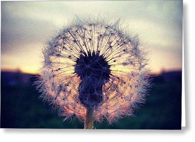 #mgmarts #dandelion #sunset #simple Greeting Card by Marianna Mills