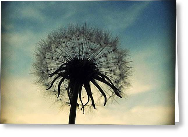 #mgmarts #dandelion #weed #sunset #sun Greeting Card by Marianna Mills