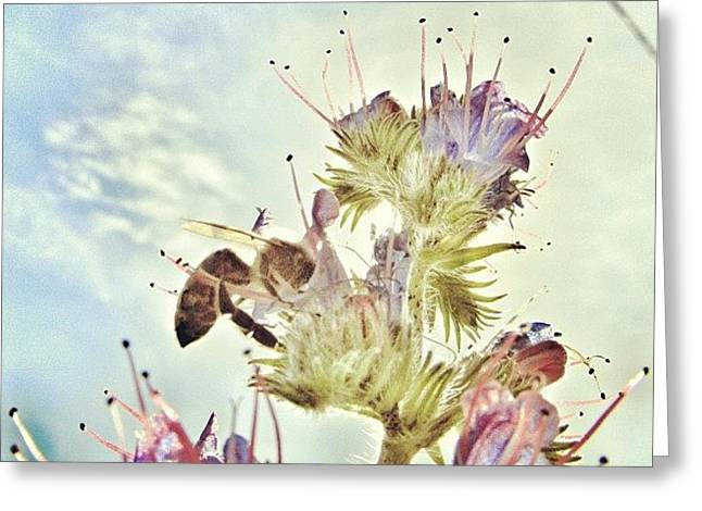 #mgmarts #flower #spring #summer #bee Greeting Card by Marianna Mills