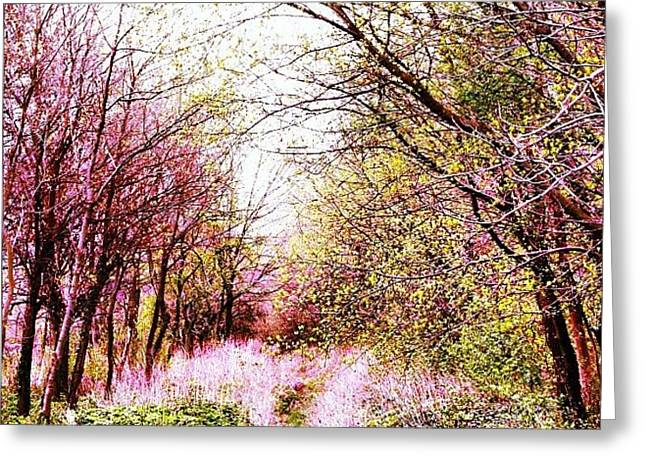 #mgmarts #hungary #visionary #forest Greeting Card by Marianna Mills