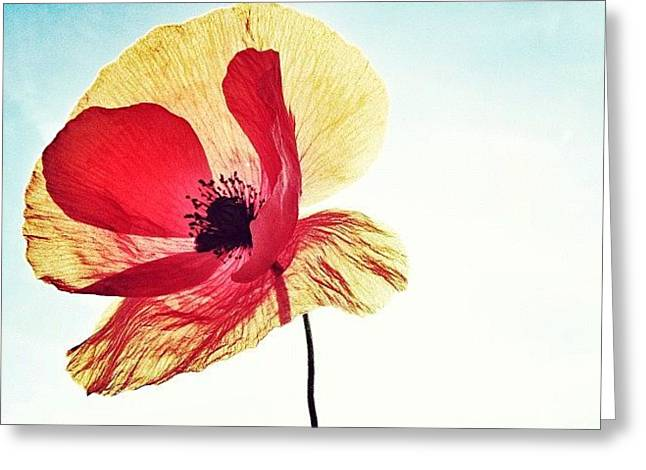 #mgmarts #poppy #nature #red #hungary Greeting Card by Marianna Mills