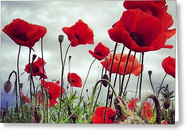 #mgmarts #poppy #weed #flower #spring Greeting Card by Marianna Mills