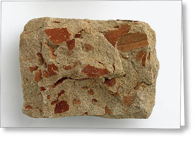 Micaceous Sandstone With Iron Oxide Greeting Card by Dorling Kindersley/uig