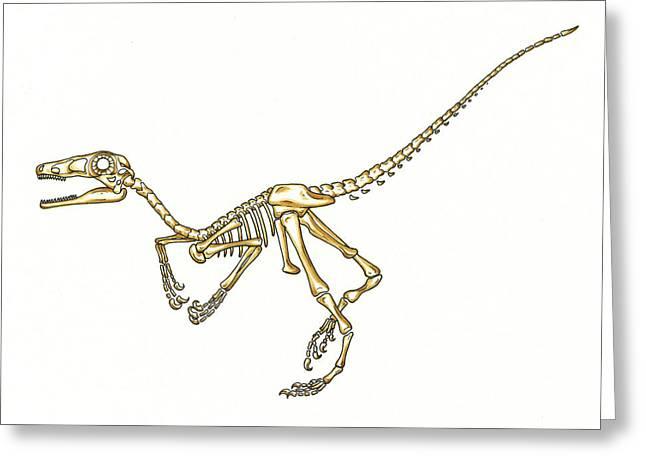 Microraptor Dinosaur Skeleton Greeting Card
